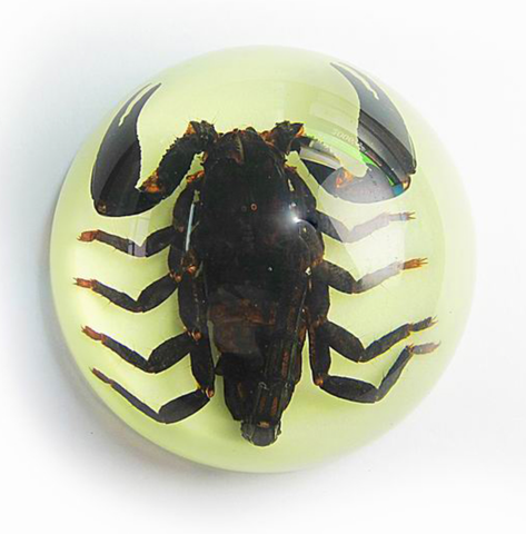 Scorpion in Half Dome Lucite Glow Large