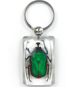 Green Rose Chafer Beetle Lucite Rectangle Keychain