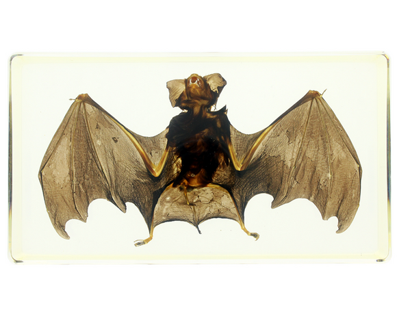 Genuine Bat in Lucite Large