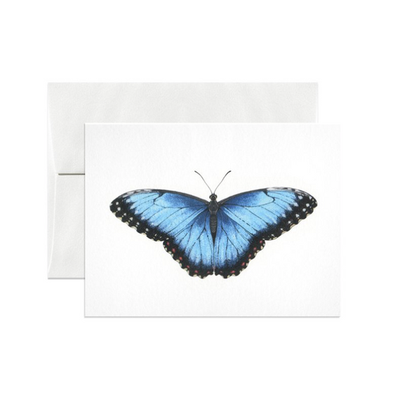 Blue Morpho Gift Card