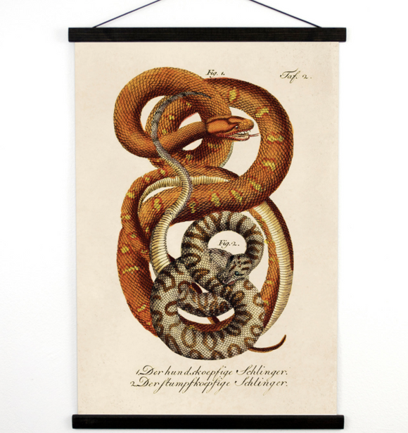 Pull Down Chart - Vintage French Zoology Canvas Hanging Print - Illustrated Snakes by LaCépède