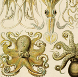 Cephalopods Canvas Hanging Vintage Reproduction Print - Chart