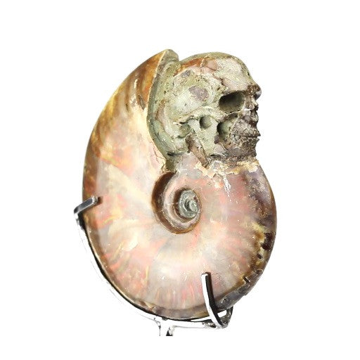 Opalized Carved Skull Ammonite on Stand