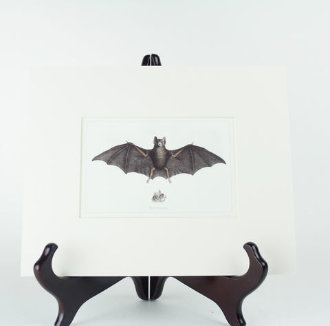 "Matted Antique Repro Bat Image 8"" x 10"""