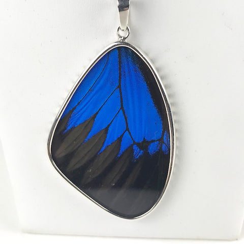 Blue Mountain Butterfly Wing XL Sterling Necklace Double Sided