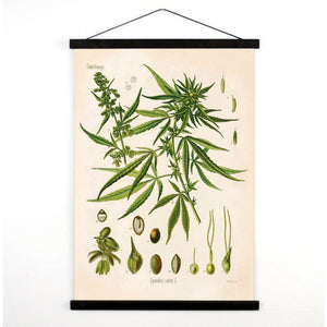 Vintage Cannabis Canvas Hanging Print - Pull Down Chart