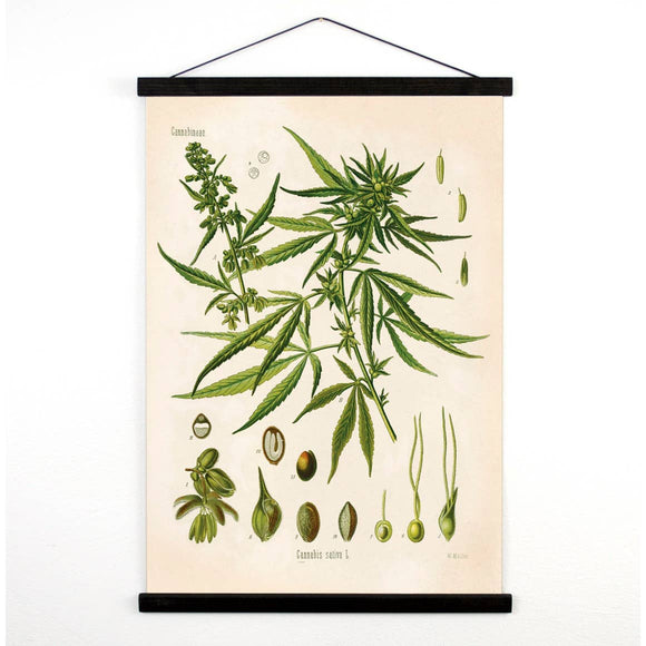 Pull Down Chart - Vintage Cannabis Canvas Hanging Print