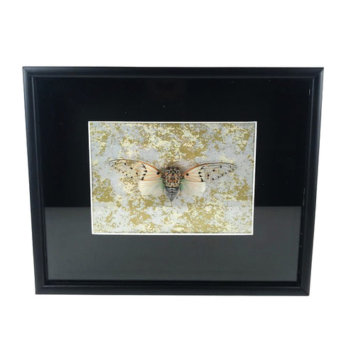 Loved To Death Ghost Cicada Shadowbox