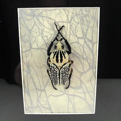 Loved To Death Large Goliath Beetle Shadowbox