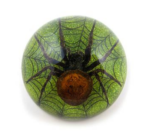 Spider on Web Green Dome Lucite Specimen
