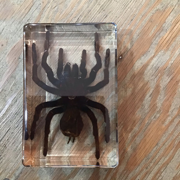 Large Tarantula Spider in Lucite
