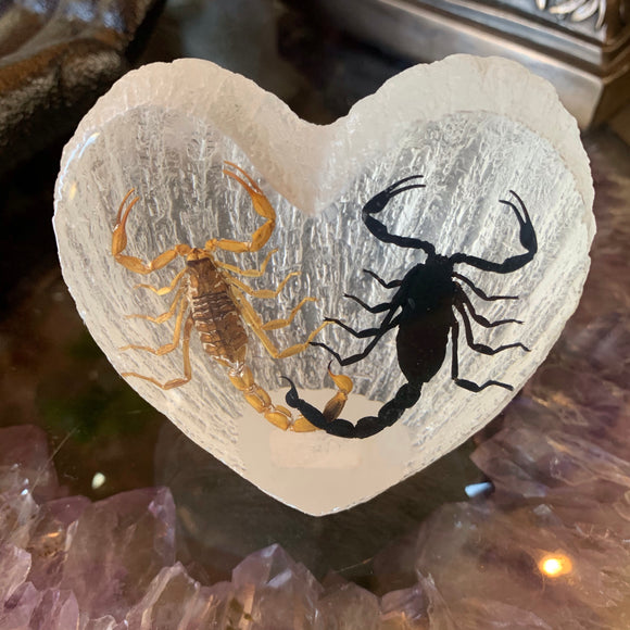 Scorpion Lovers Specimen in Lucite Heart