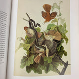John James The Watercolors for Birds of America Audubon Book