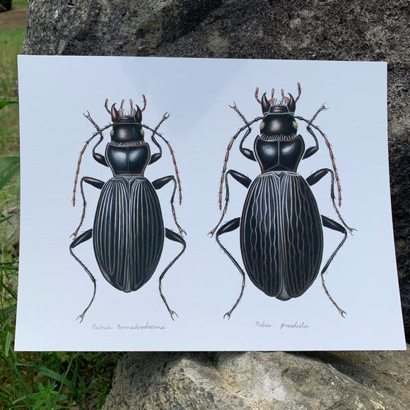 { Black Beetles } Giclee Print By Rachel Diaz-Bastin