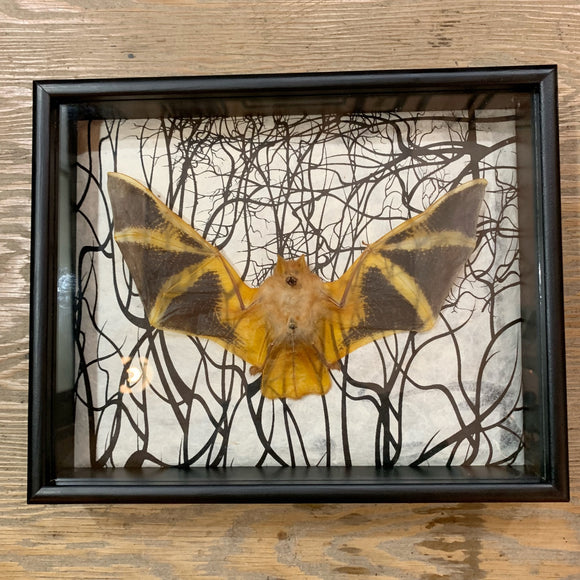 Painted Fire Bat In Curio Box Black Branches Background