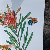 { Blue Banded Bees } Giclee Print By Rachel Diaz-Bastin