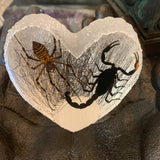 Scorpion Spider Lovers Specimen in Lucite Heart