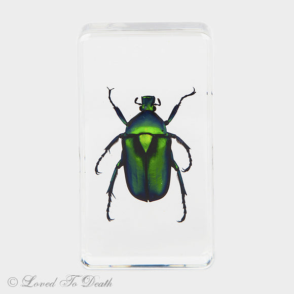 Green Flower Beetle In Lucite Specimen