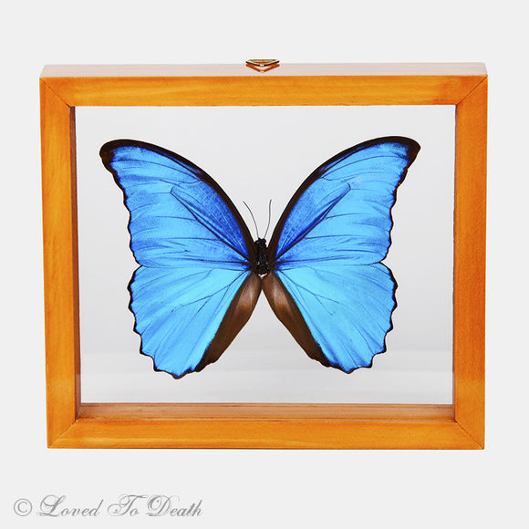 Blue Morpho Framed Natural Wood