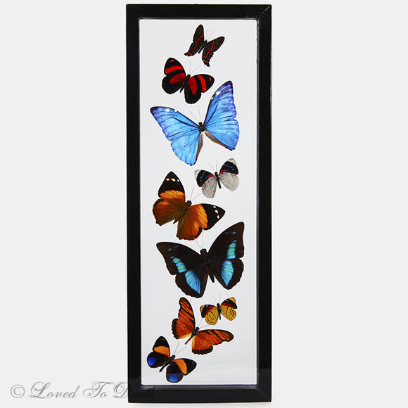 Nine Butterflies Framed in Double Glass Black