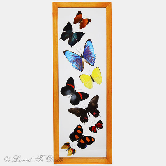 Nine Butterflies Framed In Double Glass Natural Wood Frame