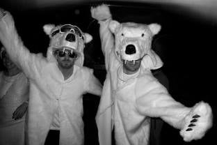two polar bear Griz Coats in the wild