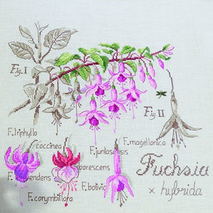 Fuchsia Study Kit
