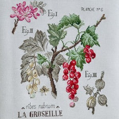 v. enginger - groseilles (red currant)