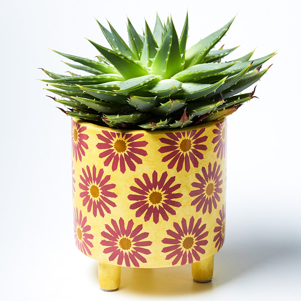 Planter - Liberty Yellow
