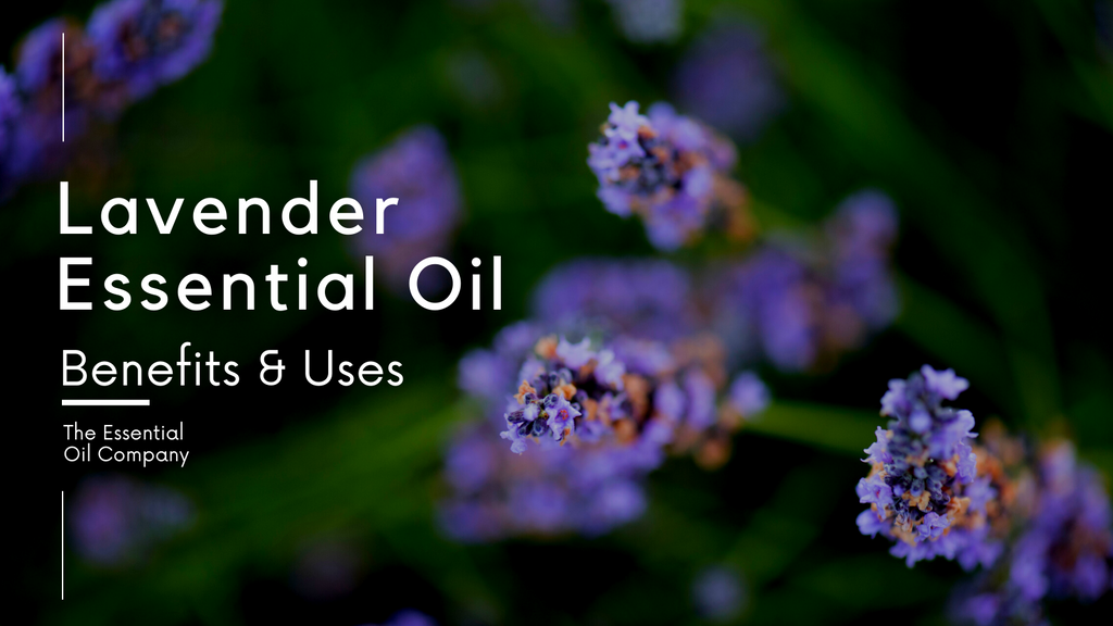 Lavender Essential Oil for Perfume Making