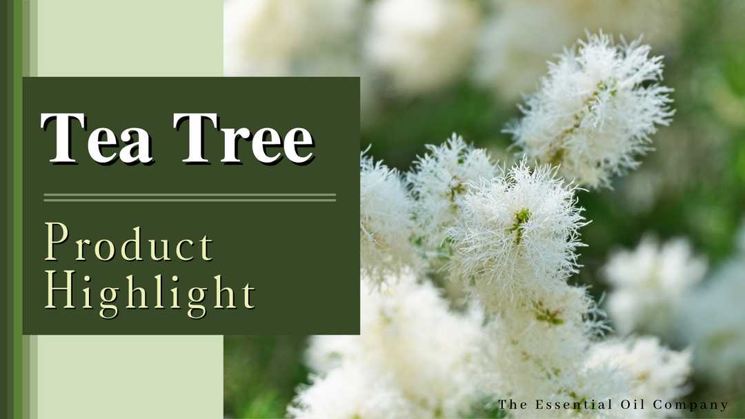 Tea Tree: Product Highlight