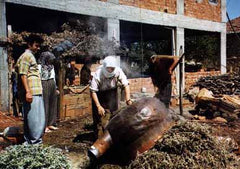 dumping spent sage from the onion after distillation of sage oil