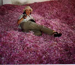 Dorene Petersen, President of the American College of Healthcare Sciences relaxes on a bed of roses.