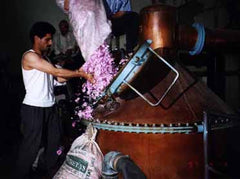 Rose petals are added to the distillation unit