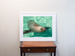 MNI 0091 Sea Lion 02