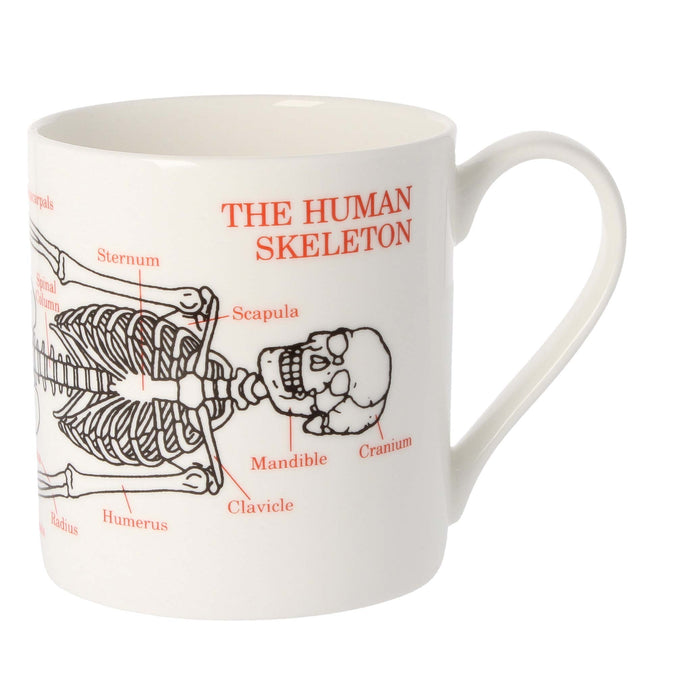 Mclaggan Smith Mugs Educational The Human Skeleton Mug