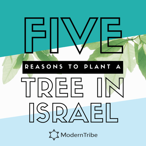 Plant a tree in Israel