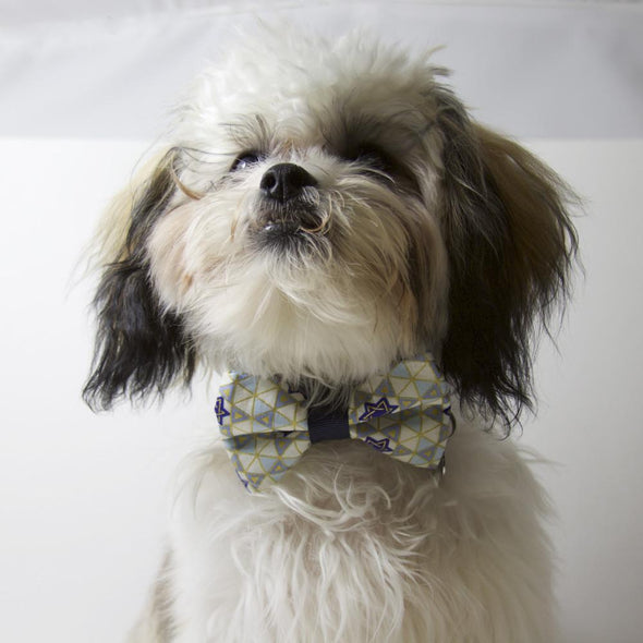 Hanukkah Bowtie for Your Pet by ChuckleHound - ModernTribe - 4