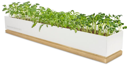 Windowsill Microgreens Garden: Spice by Pottingshed Creations - ModernTribe - 1