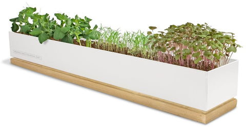 Windowsill Microgreens Garden: Organic Veggie by Pottingshed Creations - ModernTribe - 1