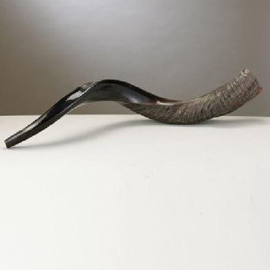 Yemenite Shofar - Long - As Seen on Colbert Report by Rite Lite - ModernTribe - 1