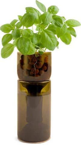 Basil Grow Bottle - Winner of Eco-Choice Award! by Pottingshed Creations - ModernTribe - 1