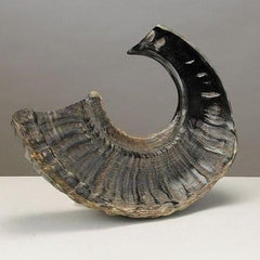Small Shofar by Rite Lite - ModernTribe