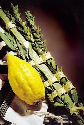 Premium Etrog & Lulav Set from Israel by Other - ModernTribe