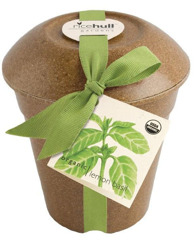Organic Basil in Biodegradable Pot by Pottingshed Creations - ModernTribe - 1
