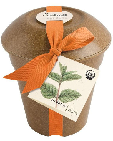 Organic Mint in Biodegradable Pot by Pottingshed Creations - ModernTribe - 1