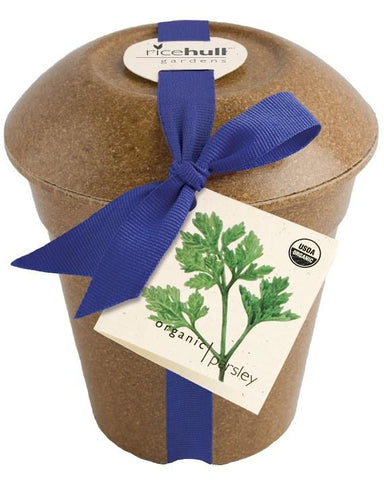 Organic Parsley in Biodegradable Pot by Pottingshed Creations - ModernTribe - 1