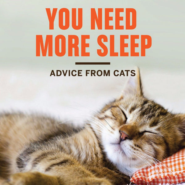 Hachette Book Group Book You Need More Sleep: Advice From Cats by Francesco Marciuliano