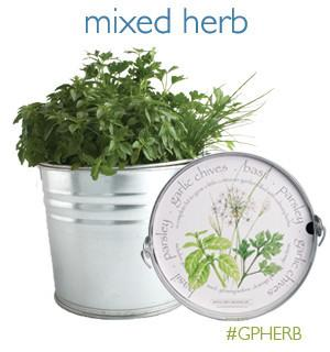 Mixed Herb Garden by Other - ModernTribe