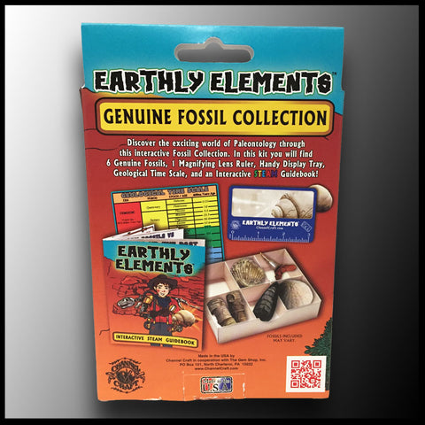 Earthly Elements: Essential Fossil Collection | The Gem Shop
